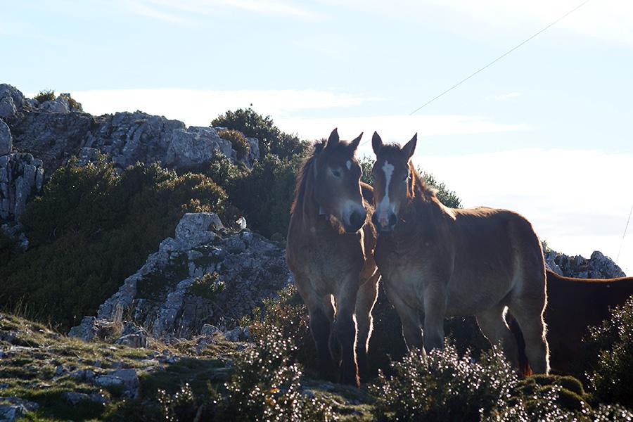 fauna comarca cinco villas