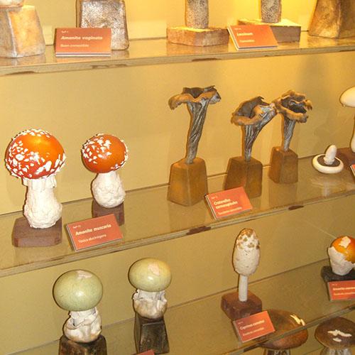 Museo Micologia Isurre